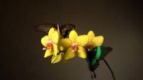 Butterflies on a flower stock video footage