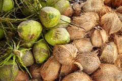 Green and brown coconut Stock Image