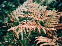Green and brown ferns of autumn stock photo