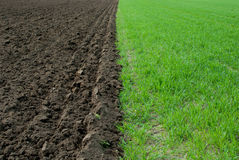 Green and brown field Stock Photography