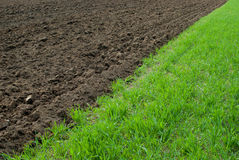 Green and brown field Royalty Free Stock Image