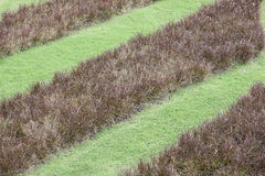 Green and brown Grass   background . Royalty Free Stock Photos