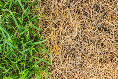 Green and brown grass background Stock Photos