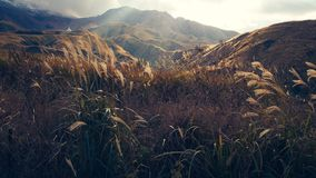 Green and Brown Grass Land, a Mountain View during Sun Rise Stock Images