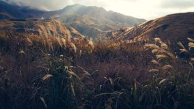 Green and Brown Grass Land, a Mountain View during Sun Rise Royalty Free Stock Image