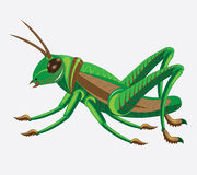 Green-brown grasshopper. Royalty Free Stock Photos