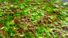 Green brown and grey underwater plants in ocean water. Green brown and grey underwater plants in ocean with clear transparent water slow motion close view stock footage