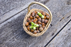 Green and brown hazelnuts in wicker basket Royalty Free Stock Photos