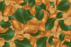 Green and brown leaf background Stock Images
