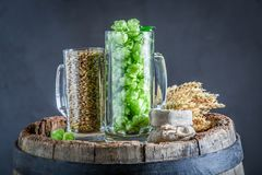 Green and brown malt and hop as ingredients for beer. On dark background royalty free stock photo