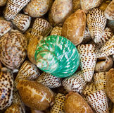 Green  and brown sea shells Stock Photo