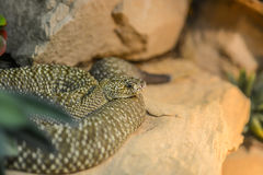 Green and brown snake sitting on a stone Royalty Free Stock Images