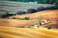 Green and brown spring ploughland. Rolling arable fields. In Czech Moravia Royalty Free Stock Image