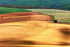 Green and brown spring ploughland. Rolling arable fields. In Czech Moravia Stock Images