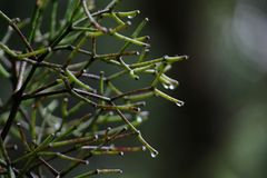 Green and brown twigs with branches wet by rain stock image