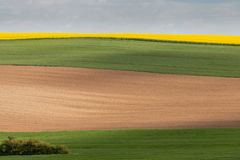 Green, brown and yellow-coloured fields as layers. Four fields as coloured areas in layers corn, earth, rapeseed, representing agriculture, quietude, width Royalty Free Stock Photography