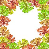 Green brown yellow red maple leaf frame Stock Photo