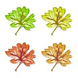 Green brown yellow red maple leaf isolated Royalty Free Stock Photos