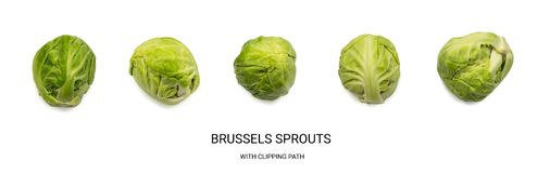 Green Brussel Sprouts Isolated. On White Background. Cabbage Plants Top View with Clipping Path Stock Photo