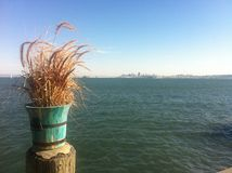 Green Bucket in front of water view. Bucket with plants, City of san francisco in the background clear blue sky Royalty Free Stock Images