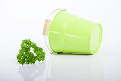Green bucket with parsley and dill isolated on Stock Images