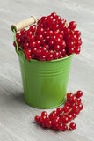Green bucket with red currants Royalty Free Stock Photography