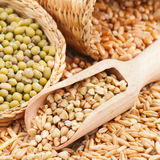 Green buckwheat, wheat, oat and mung Royalty Free Stock Image