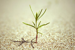Green bud sprout in the sand Stock Photography