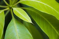 Green budding plants Royalty Free Stock Photos