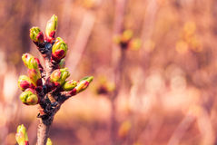 Green buds Stock Photography