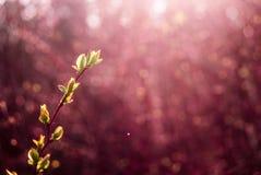 Green buds Stock Photo