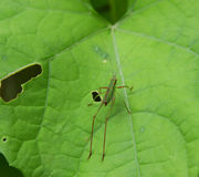 Green bug. Sitting on a green leaf with holes eaten through it Stock Photo