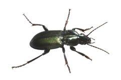 Green Bug Stock Photos