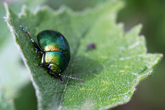 Green bug. On green leaf Stock Photo