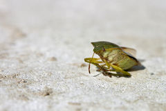 Green bug Stock Images