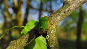 Green bug. On a branch stock image