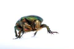 Green bug, macro Stock Image