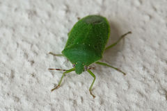 Green bug on the wall Stock Photos