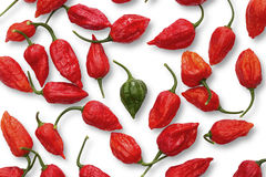 Green Buht Jolokia pepper between Red ones. With white background stock photography