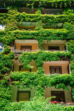 Green building covered ivy Stock Photos