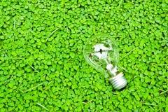 Green bulb Stock Photos
