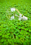 Green bulb. Bulb on green weed grass Stock Images