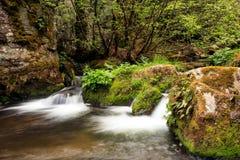 Green bulgarian river Stock Image