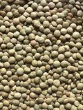 Green bulk lentils. Its can be used in the food and health industries, catering, cooking, cookery, restaurant, etc.. for stylish presentation or Issues related royalty free stock image