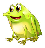 A green bullfrog Stock Photo