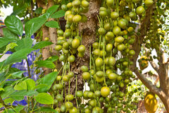 Green Burmese grape Stock Photos