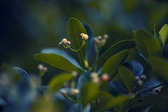 Green bush. During fall on dark light, outside in the park royalty free stock photo