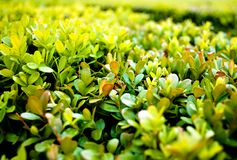 Green Bush Stock Photos