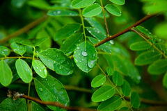 Green bush Stock Photography