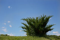 Green bush against blue skies. On hill Royalty Free Stock Photo